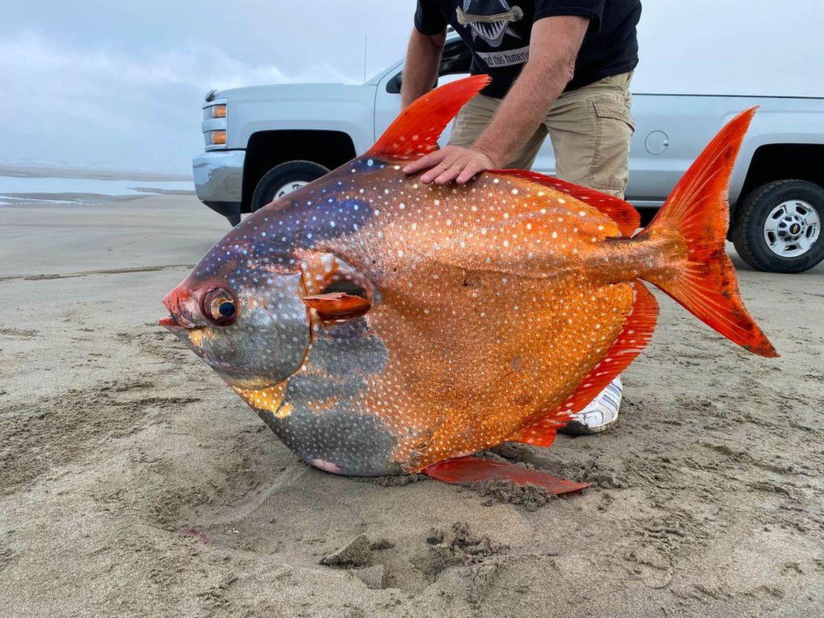 Estudian un pez gigante que apareció en la costa del norte de EEUU
