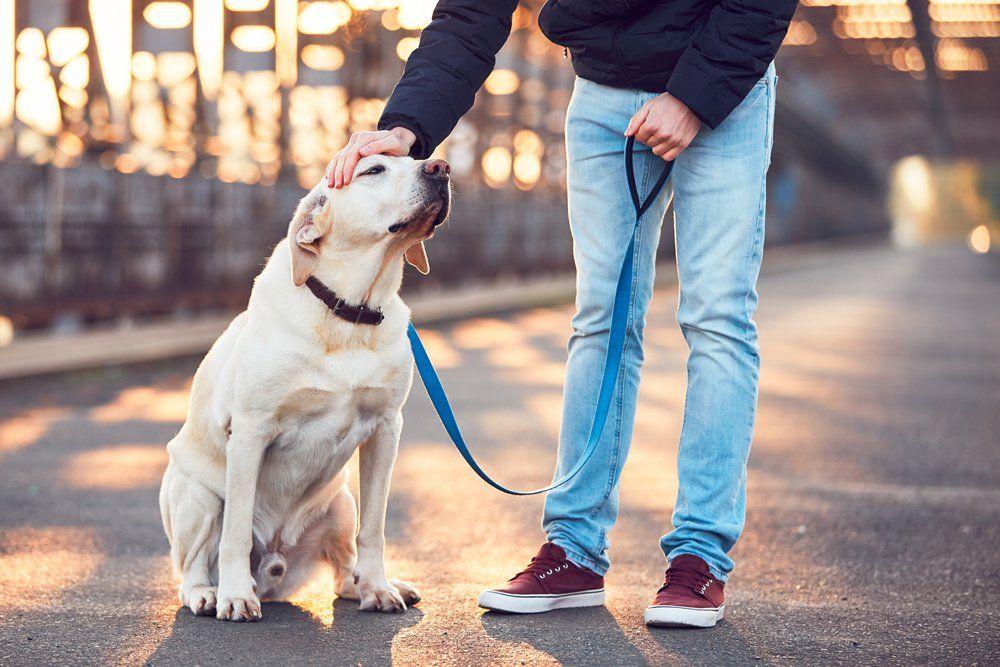 Pagan 3.000 dólares por mes para pasear al perro del director de un estudio de abogados