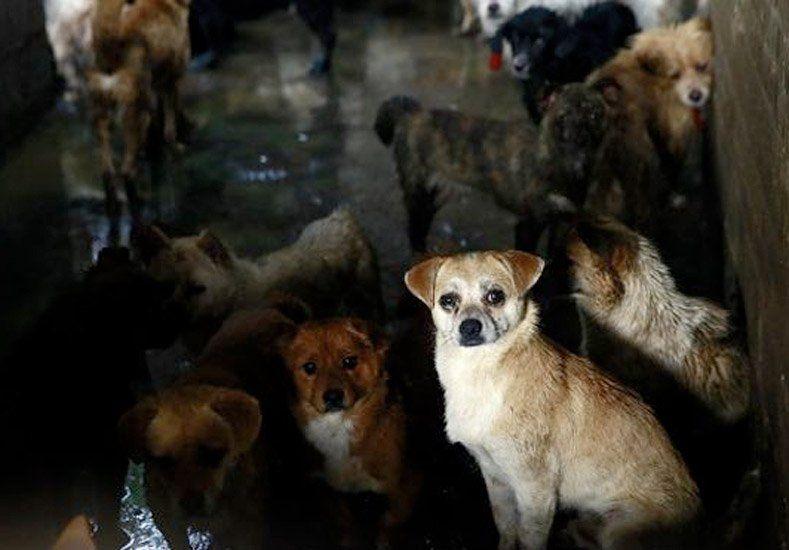 En un festival chino se comen 10 mil perros