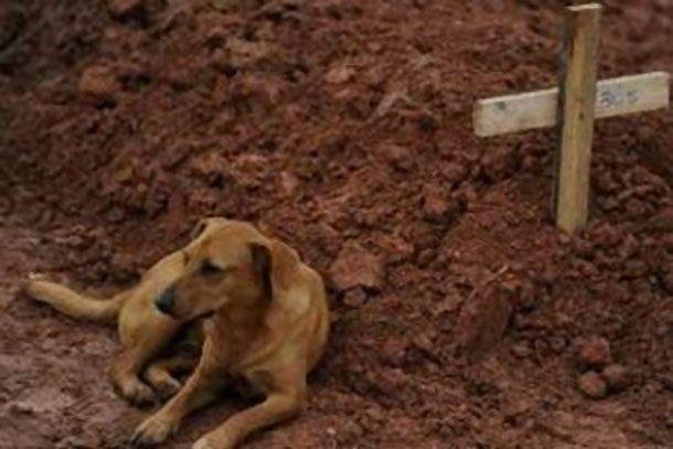 Brasil: un perro que no abandona a su dueña muerta en la inundación conmueve al mundo