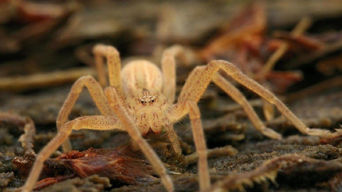 Decenas de arañas invadieron la habitación de una nena