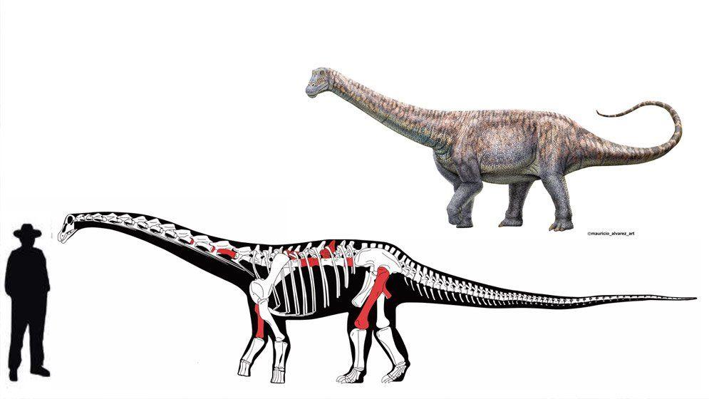 Descubrieron fósiles de una nueva especie de Titanosaurio