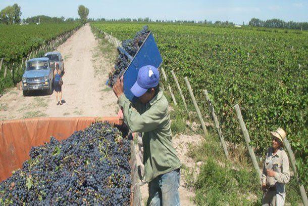 Según el gobierno, este año los obreros temporarios trabajan en mejores condiciones