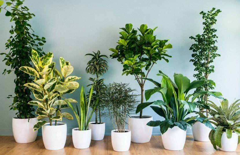 Nutrí tus plantas de interiorcon estos fertilizantes orgánicos