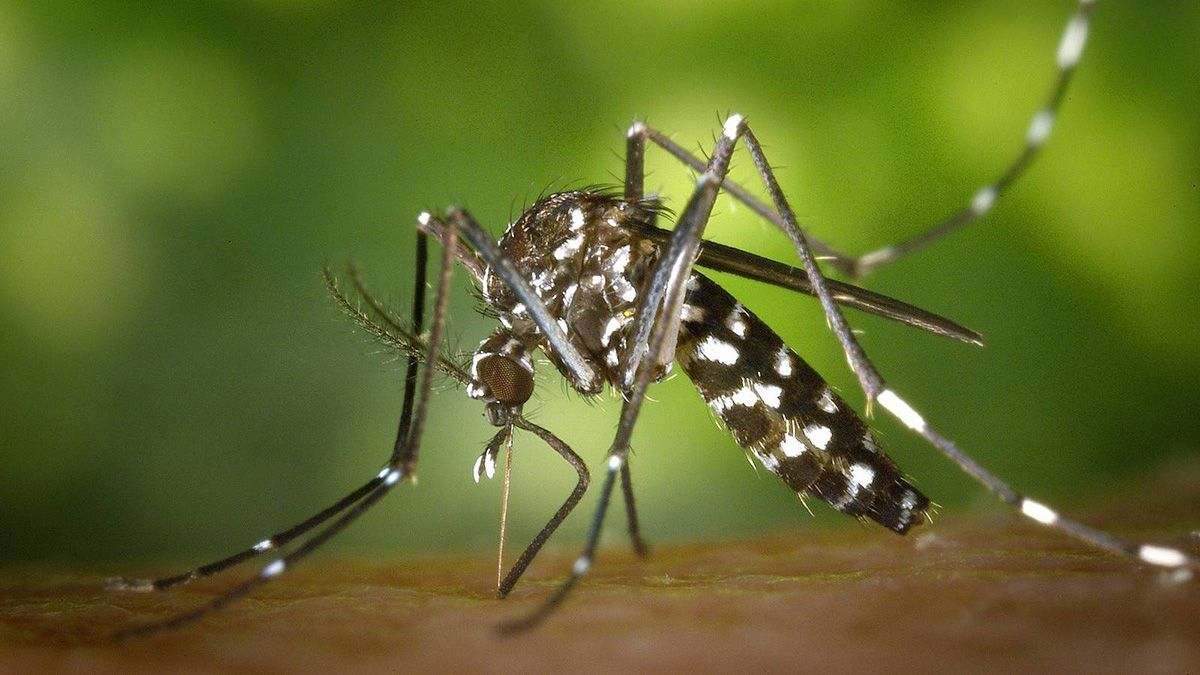 Jujuy reportó cinco nuevos casos de dengue en la última semana