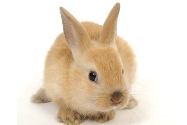 Las predicciones para el Año del Conejo
