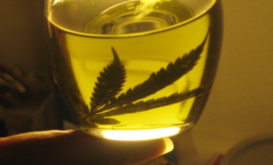 El macrismo aceptó tratar la legalización de la marihuana medicinal