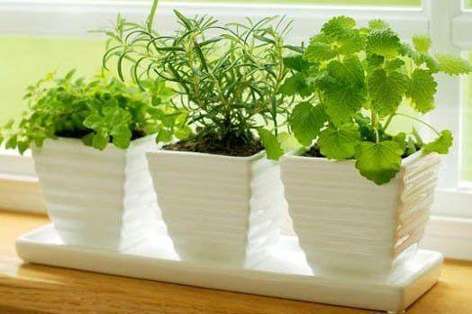 Las 50 plantas que atraen energía positiva