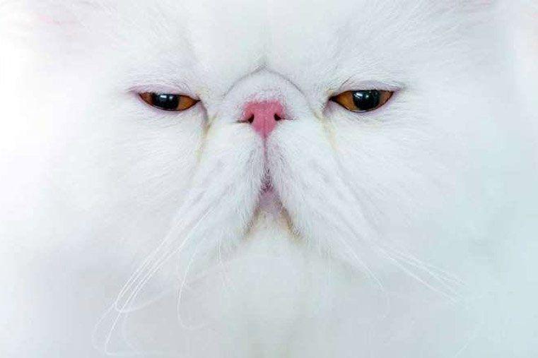 Un gato entró a la cabina de un avión en pleno vuelo