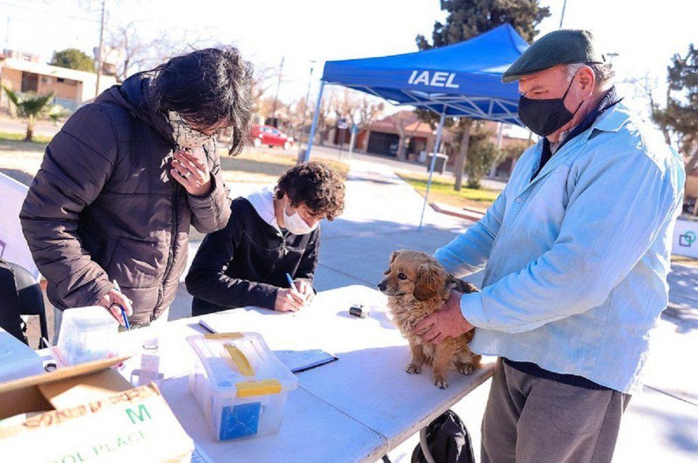 Vacunarán a las mascotas de los vecinos de Desamparados
