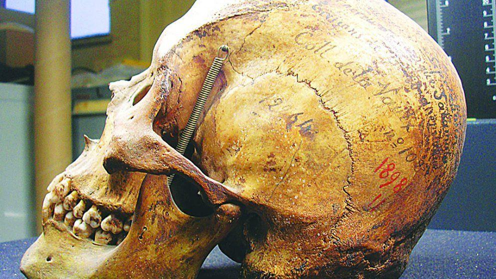 Volverán de Francia a Argentina, los restos de un tehuelche que se exhibían en un museo