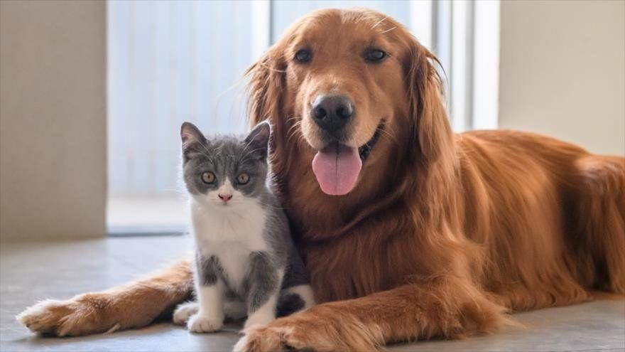 Covid-19: llega el primer test rápido para mascotas