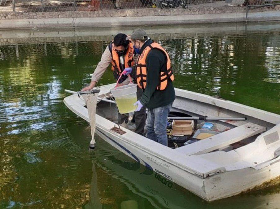 Ambiente trabaja en el monitoreo del Lago del Parque de Mayo