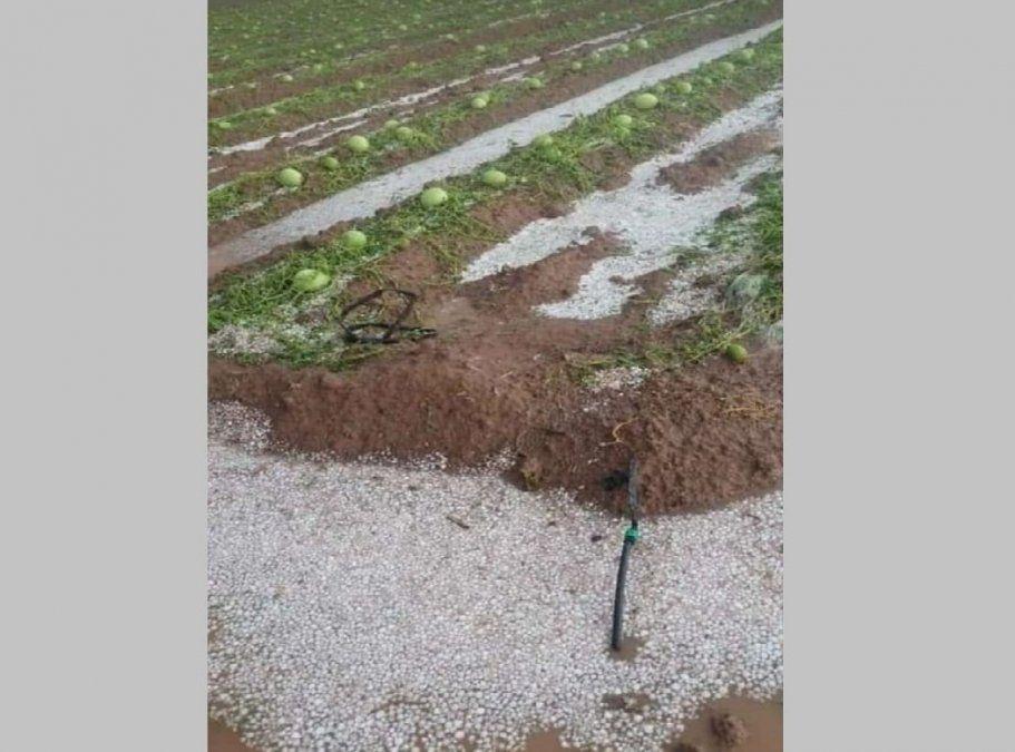 Declararon la emergencia agropecuaria nacional para San Juan