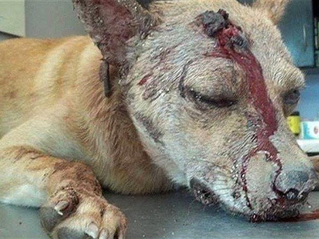 Enojado por su separación, apuñaló al perro de su ex