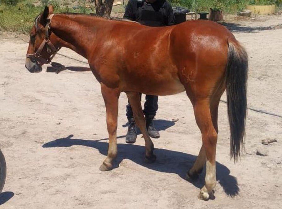 La Policía junto al caballo que fue robado.