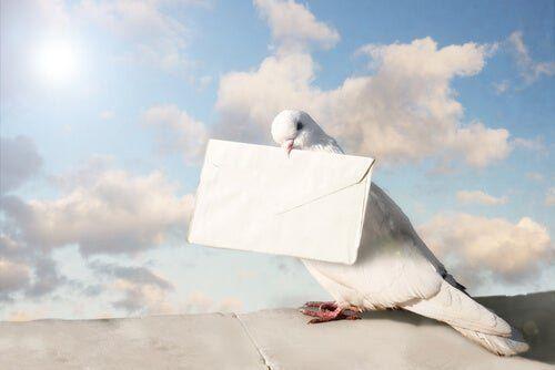 La paloma mensajera más cara del mundo se vendió por U$S 1.900.000