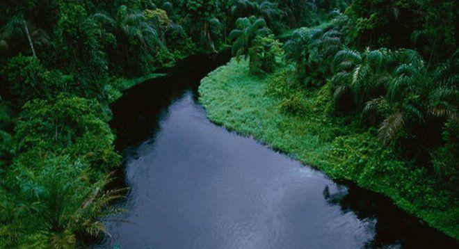 La selva del Congo está perdiendo su capacidad de absorber dióxido de carbono