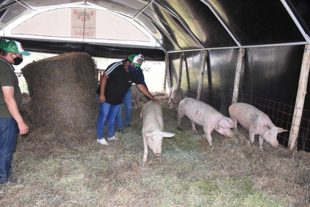 Crece el proyecto porcino en Jáchal elaborado con el aporte de Minas Argentinas