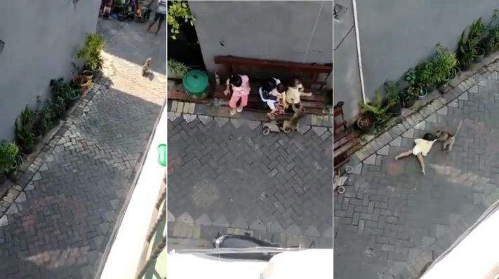 El lado b de la historia del mono en moto que intentó robarse una bebé