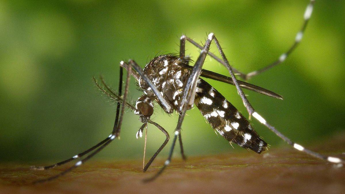 Dengue: trabajaron en la prevención en más de 1.500 viviendas