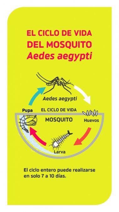 Expectativas por el cierre de temporada del mosquito, sin casos de dengue