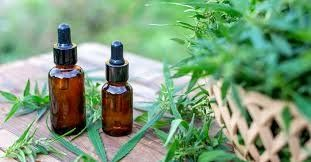 Cómo impacta la legalización del cannabis para uso medicinal en la empresa CanMe Origen San Juan