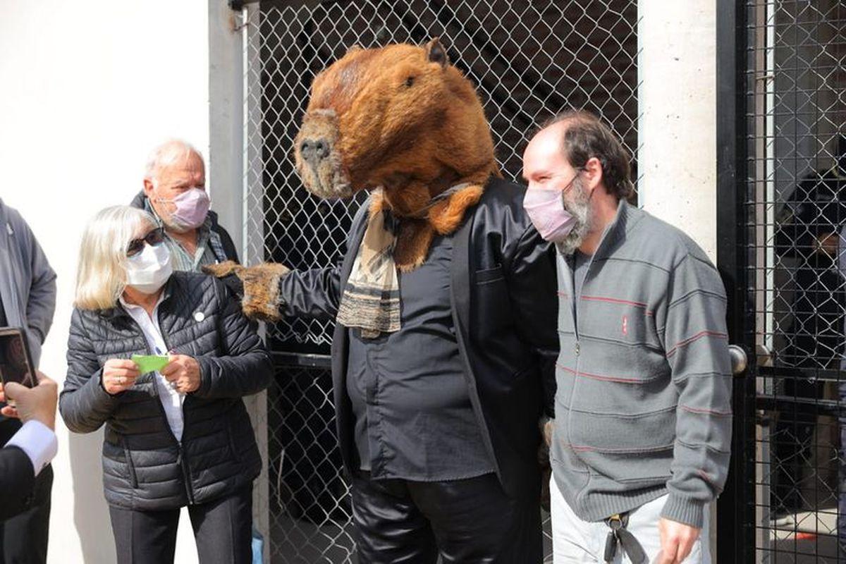Un carpincho fue a votar en Buenos Aires.