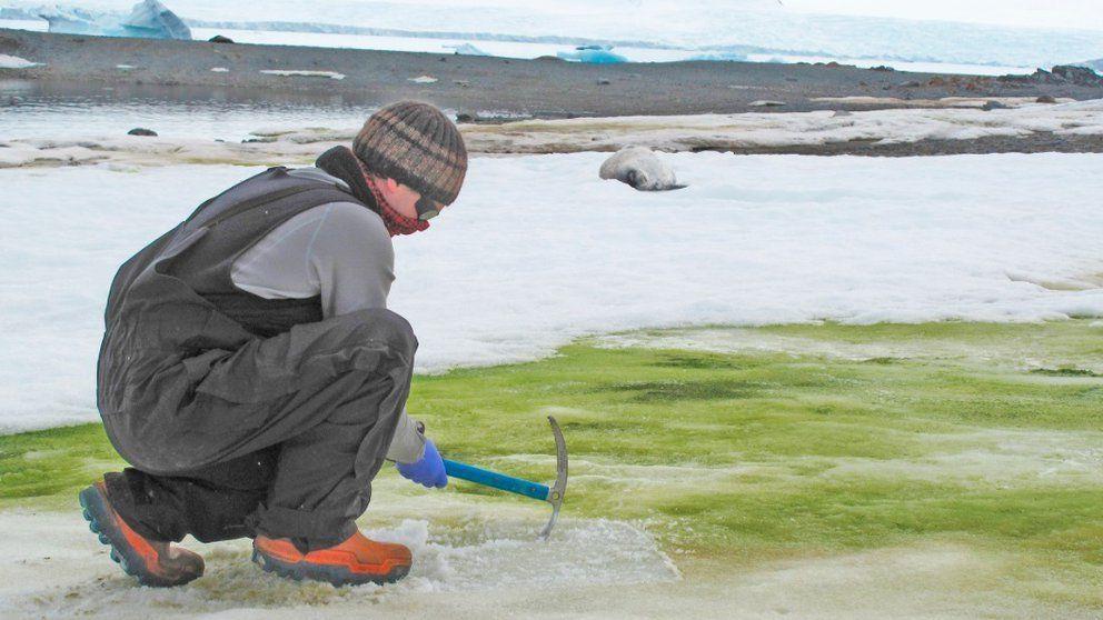 Huellas de hojas fosilizadas evidenciaron la existencia de bosques en la Antártida