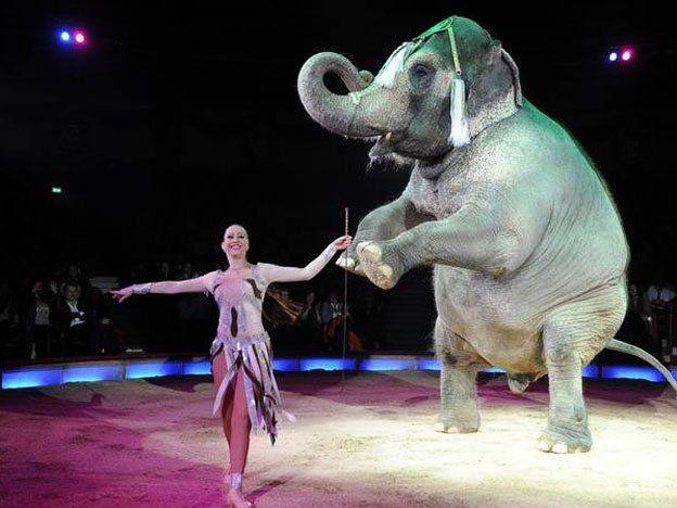 Una elefanta escapó de un circo y mató a un hombre