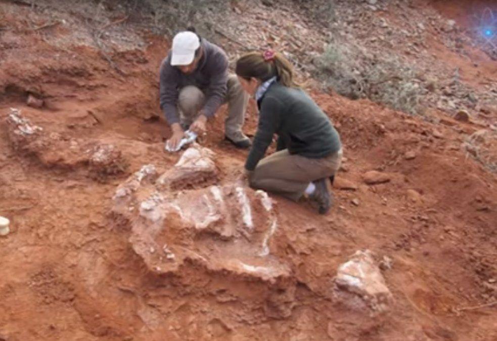 Los restos de dinosaurios hallados en Balde de Leyes son parte de los 5 hitos de la ciencia de 2018