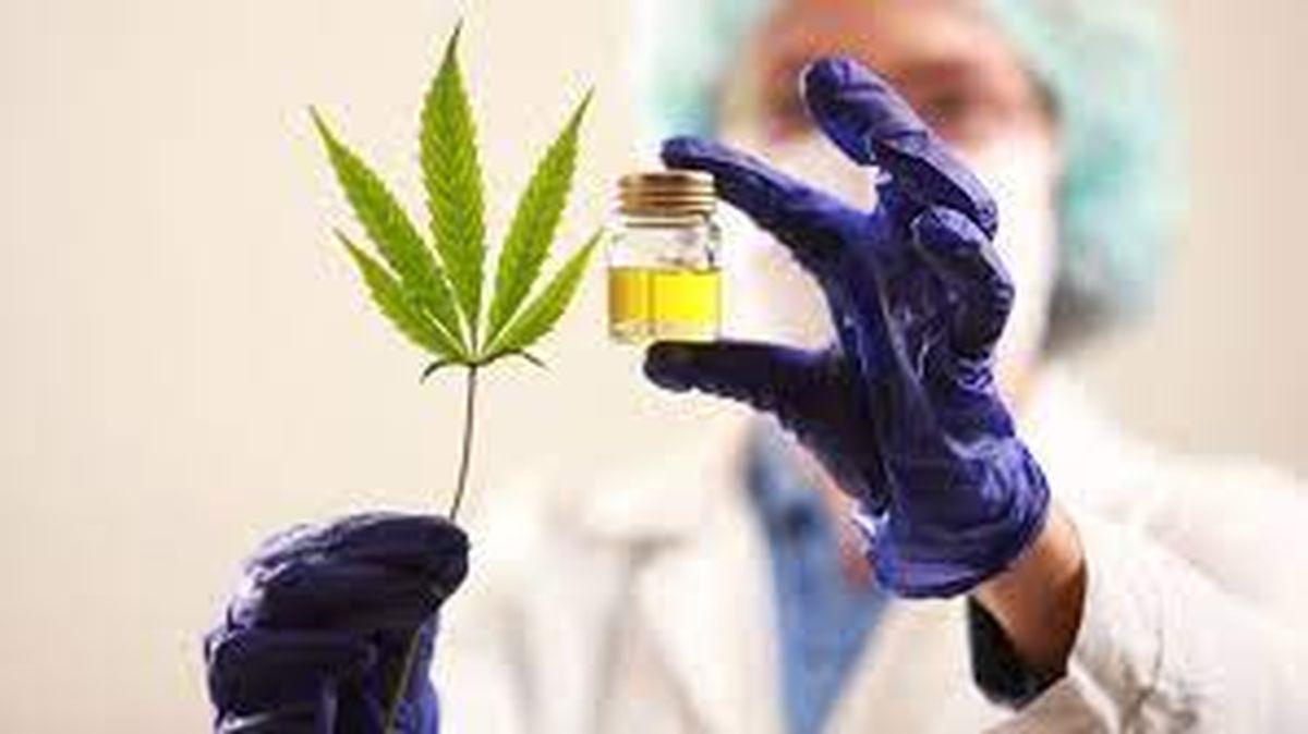 Cannabis: la gran diferencia entre el medicinal y la marihuana recreativa