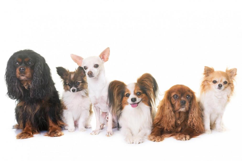 Los perros nos siguen a todos lados por estas causas