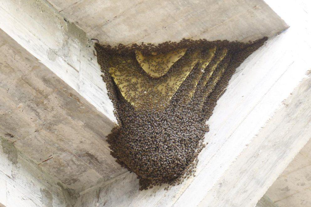 Invasión de insectos en la cancha de Central Córdoba.
