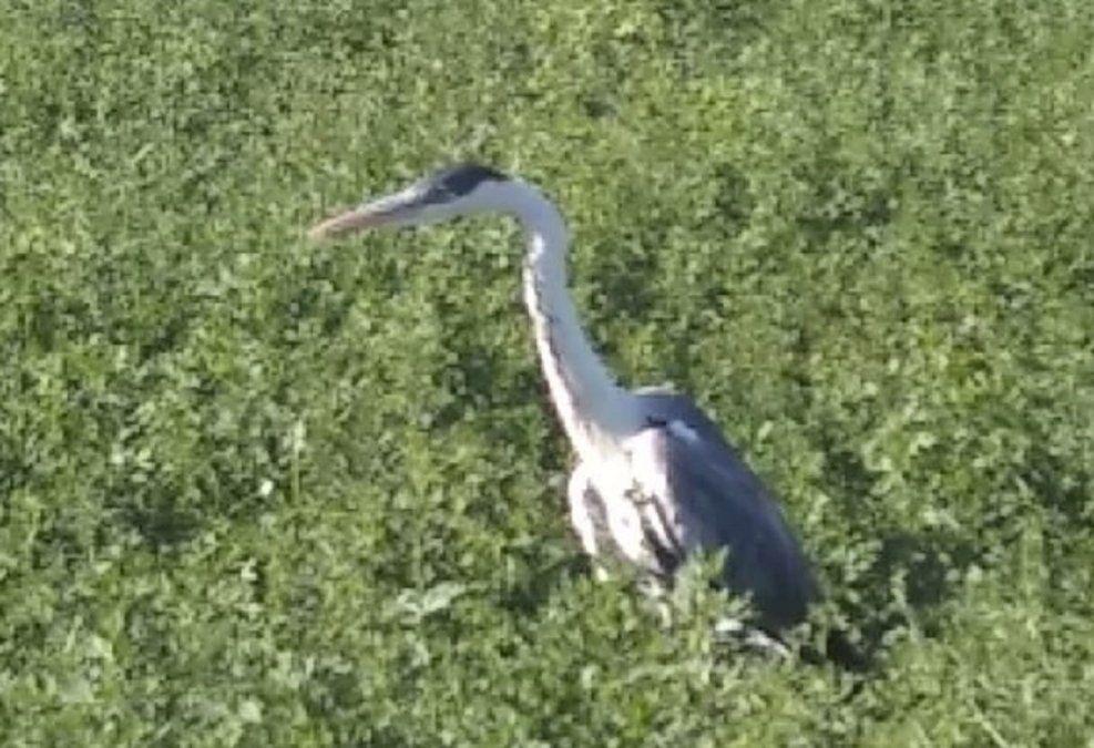 Encontraron un ave exótica en una finca en Chimbas: estaba herida