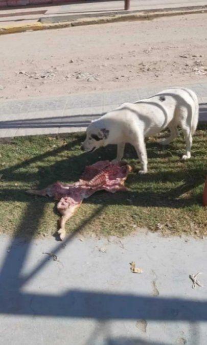 Insólito: un perro se robó un lechón.