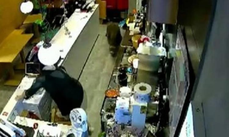 Un jabalí salvaje entró a una tienda y armó un desastre