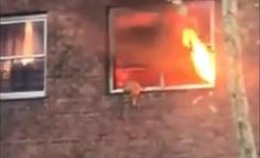 Un gatito saltó a último momento y pudo salvarse del incendio de un edificio