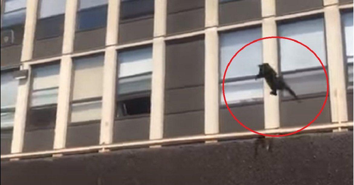 Un gato saltó de un quinto piso y se salvó de un incendio
