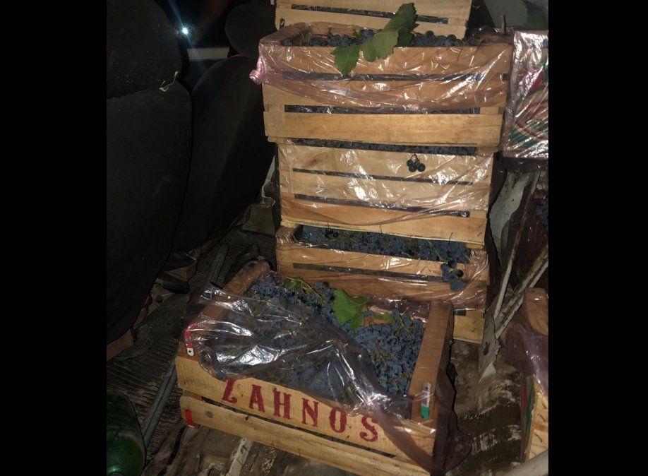 Cayeron dos sujetos por robar 144 kilos de uva en 25 de Mayo