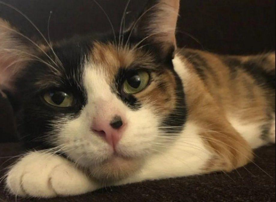Una gata detectó una fuga de gas en su casa.