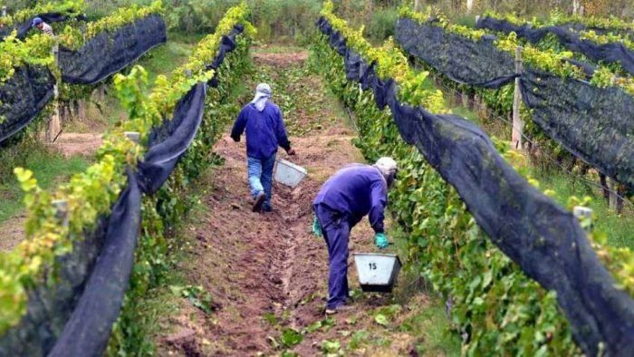 Establecieron un estricto protocolo para los trabajadores golondrinas que ingresen a la provincia