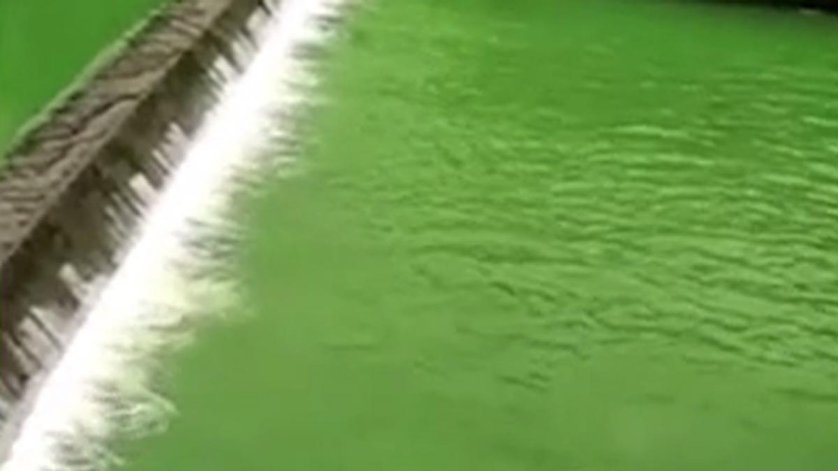 Un río asombra a todos: el agua se vuelve verde de la noche a la mañana y no es por contaminación