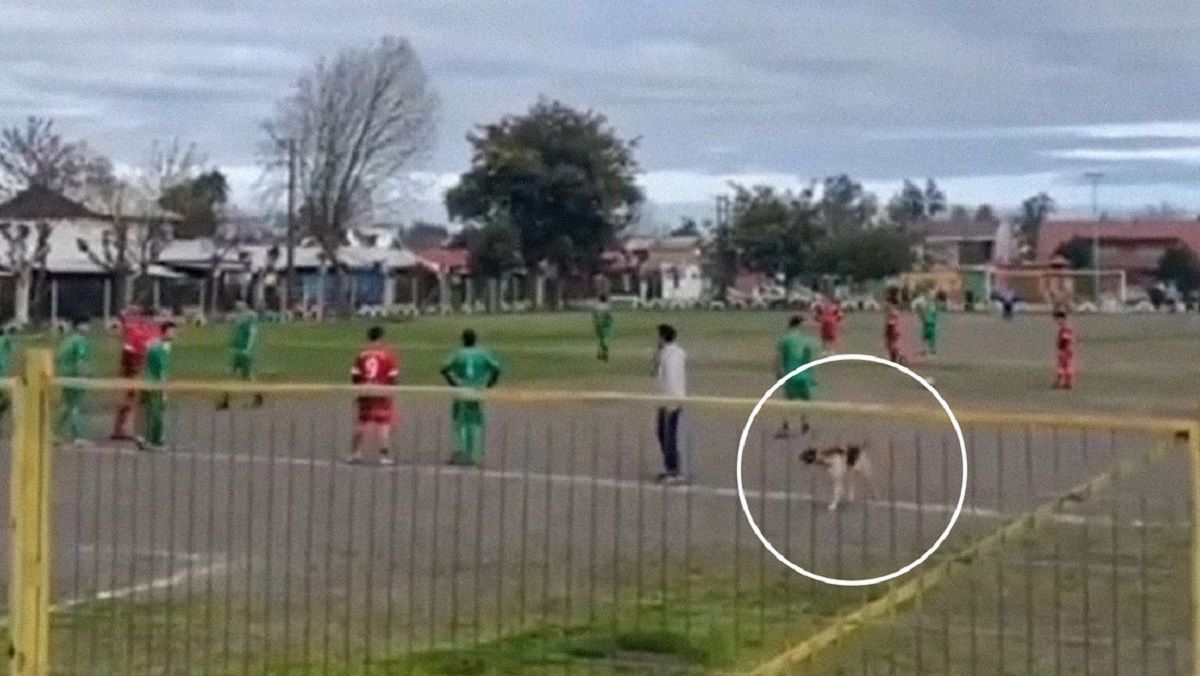 Un perro ingresó a una cancha y metió un gol.