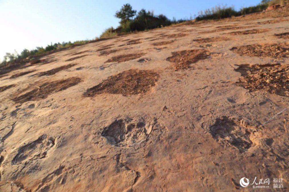 Encontraron en China huellas únicas de dinosaurios del Cretácico