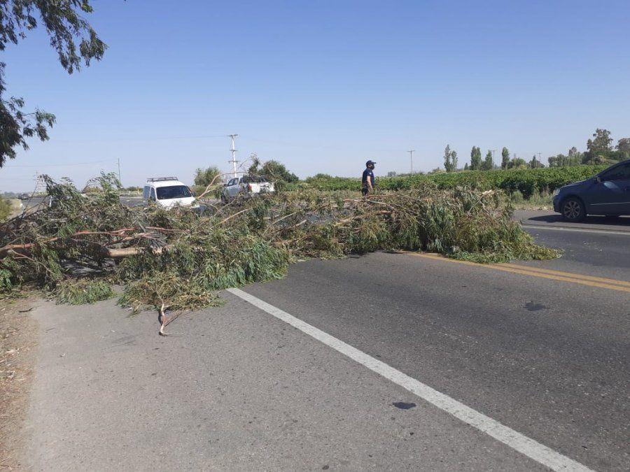 El viento generó que un árbol caiga sobre RN20