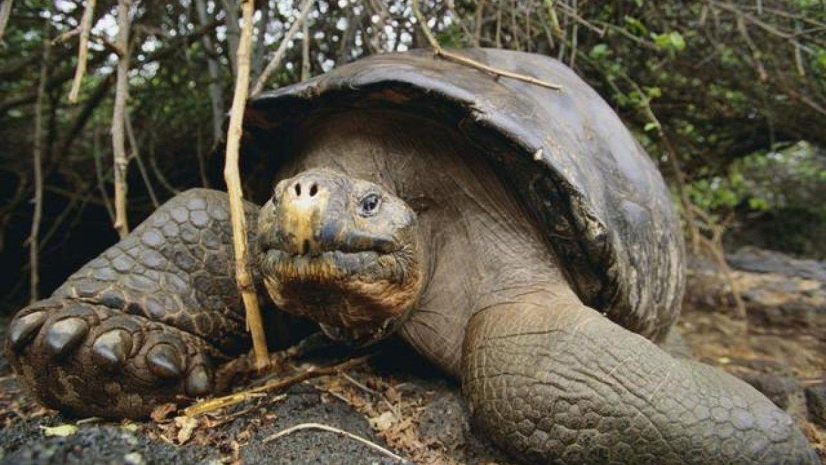 Encontraron una valija con 185 tortugas de las Islas Galápagos