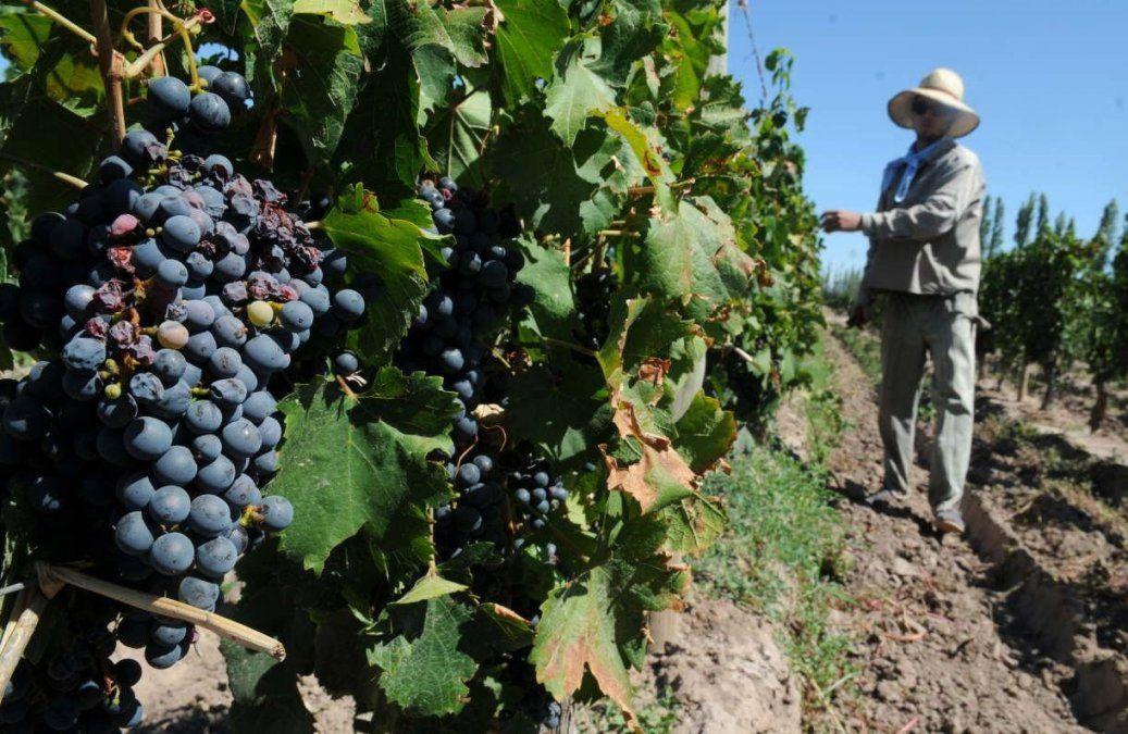 El Gobierno aportará $600.000 al sector vitivinícola