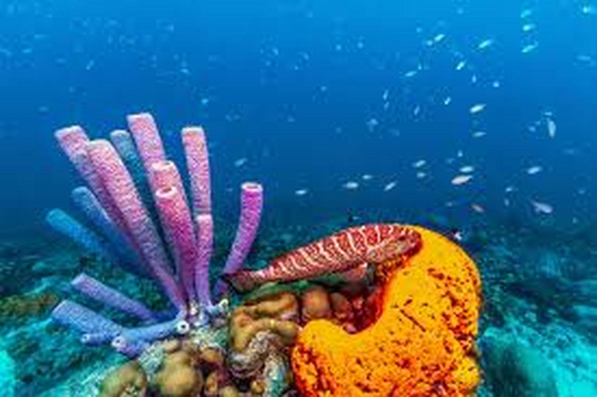 Estudian a las esponjas marinas como una alternativa al uso de antibióticos
