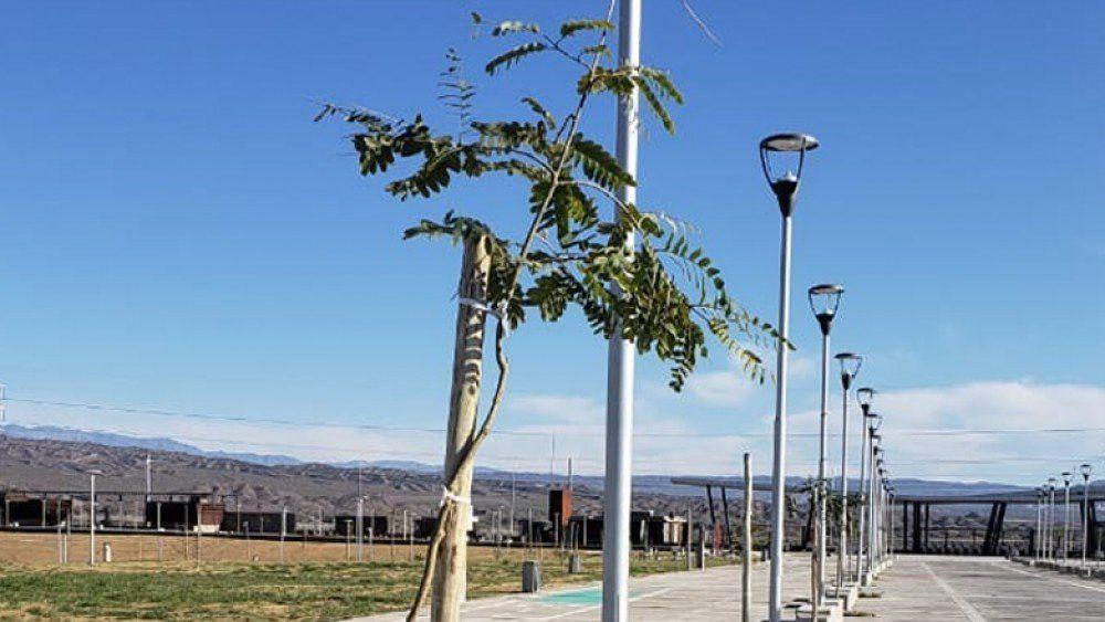 Nueva cara para el Costanera Complejo Ferial: colocaron más de 200 árboles